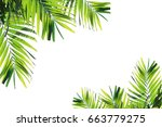 top coconut leaves on a white... | Shutterstock . vector #663779275