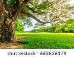 old big strong tree in...   Shutterstock . vector #663836179
