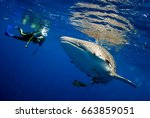 surprised divers with whale... | Shutterstock . vector #663859051