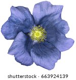 flower blue on a white isolated ... | Shutterstock . vector #663924139