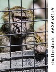 sad monkey behind the bars | Shutterstock . vector #663958159