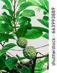 custard apple | Shutterstock . vector #663993889