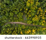 Aerial View Of The Forest Tree...