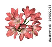 lily bouquet 7 flowers pink... | Shutterstock .eps vector #664002055
