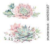 watercolor vintage succulents... | Shutterstock . vector #664050187