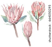 Watercolor Vintage Protea...