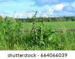summer field | Shutterstock . vector #664066039