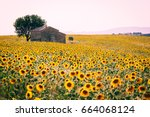 valensole plateau  provence ...   Shutterstock . vector #664068124