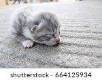 Stock photo tiny cute newborn grey kitten resting with the eyes still closed 664125934