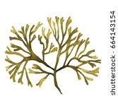 Brown Seaweed  Kelp  Algae In...