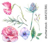 hand painted floral elements... | Shutterstock . vector #664151581