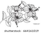 hibiscus flowers drawing and... | Shutterstock .eps vector #664161019