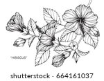 hibiscus flowers drawing and... | Shutterstock .eps vector #664161037