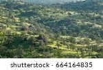 green hills of california | Shutterstock . vector #664164835
