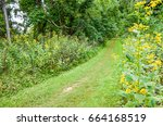 Small photo of Path through forest with yellow wingstem flowers in Shenandoah valley in Appalachian Blue Ridge mountains in Virginia