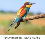 exotic bird flew to nesting in... | Shutterstock . vector #664176751
