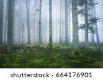 dark misty pine forest with a... | Shutterstock . vector #664176901