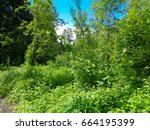 june solstice in the deep of... | Shutterstock . vector #664195399