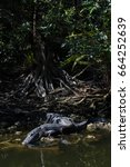 Small photo of Alligator (Alligator mississippiensis) Resting, Big Cypress National Preserve, Florida, USA
