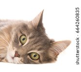 cat face with selective focus... | Shutterstock . vector #664260835