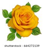 rose isolated on white... | Shutterstock . vector #664272139