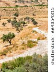 Small photo of Olive Tree Field in Jerusalem - Middle East