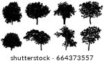 silhouette tree isolated on... | Shutterstock . vector #664373557