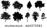silhouette tree isolated on... | Shutterstock . vector #664373581