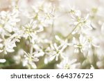 Blurred White Floral Background