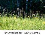 midsummer countryside meadow... | Shutterstock . vector #664393951