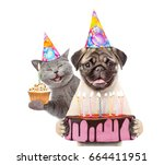 Stock photo funny puppy and kitten in party hats holding cupcake and birthday cake with many burning candles 664411951