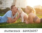 Stock photo cute fluffy border collie puppy licks owner loving bonding moment happy smiling couple loving pet 664426057