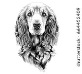 dog breed cocker spaniel muzzle ... | Shutterstock .eps vector #664452409