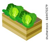 green cabbages in wooden box... | Shutterstock .eps vector #664470379