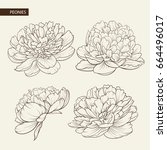 set of peony flowers contour... | Shutterstock .eps vector #664496017