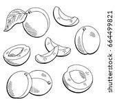 apricot fruit graphic black... | Shutterstock .eps vector #664499821