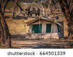Safari Tent With Single Africa...