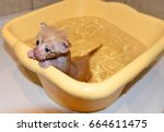 Stock photo newborn kitty new born baby cat cute baby cat close photo lovely kitten pet bathing red ginger 664611475