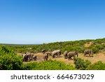 Elephants In Addo Elephant...