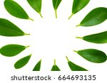 green leaves frame template on...   Shutterstock . vector #664693135