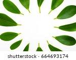 green leaves frame template on... | Shutterstock . vector #664693174