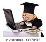 Stock photo  intelligent cat for the laptop animal in the academic robes on a white background year cat 66470494
