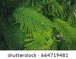 green leaf lined background | Shutterstock . vector #664719481