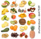 image set of fresh ripe exotic... | Shutterstock . vector #6647539