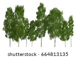 trees in a row isolated on... | Shutterstock . vector #664813135