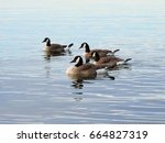 Four Canadian Geese   Lake...