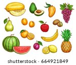 exotic fruits isolated icons... | Shutterstock .eps vector #664921849