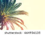 palm trees branches against sky.... | Shutterstock . vector #664936135