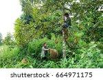 uttaradit  thailand   june 27 ... | Shutterstock . vector #664971175