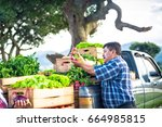 farmer's hands holding fresh... | Shutterstock . vector #664985815